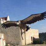 Adler-Flugschau